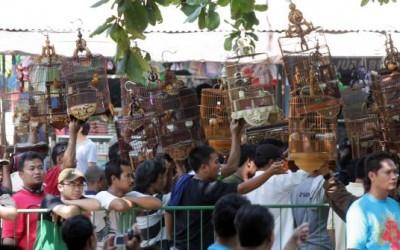 pasar-satwa-dan-tanaman-yogyakarta-pasty-jogja