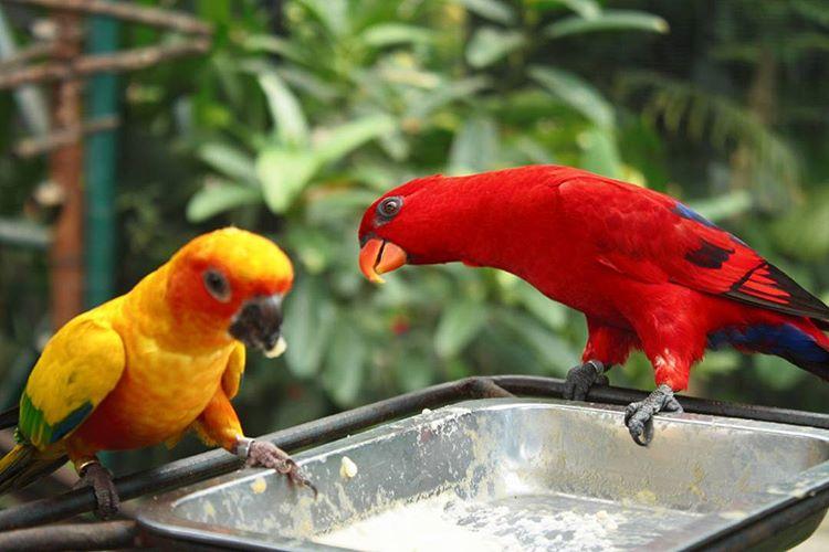 gembira-loka-zoo