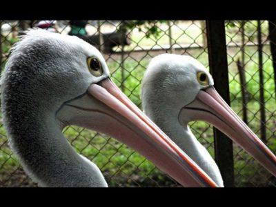kebun binatang taru jurug